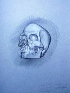 clay skull 1 / 1988